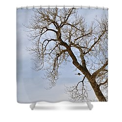Flying Goose By Great Tree Shower Curtain