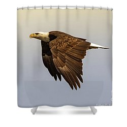 Flying High Shower Curtain by John Roberts
