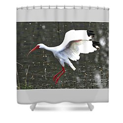 Flying Ibis Over Gray Pond Shower Curtain by Carol Groenen