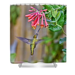 Flying Jewel Shower Curtain