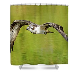 Flying Osprey Shower Curtain by Jerry Cahill