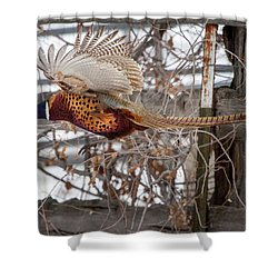 Flying Pheasant Shower Curtain