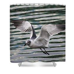 Flying Seagull Shower Curtain by Carol Groenen