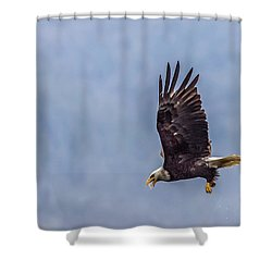Flying With His Mouth Full.  Shower Curtain by Timothy Latta