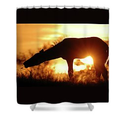 Foal Silhouette Shower Curtain