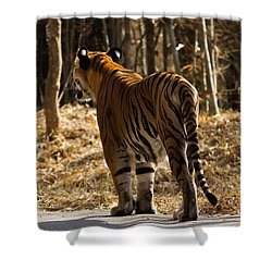 Shower Curtain featuring the photograph Focused by Ramabhadran Thirupattur
