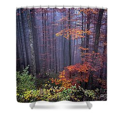 Shower Curtain featuring the photograph Fog And Forest Colours by Elena Elisseeva