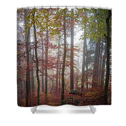 Shower Curtain featuring the photograph Fog In Autumn Forest by Elena Elisseeva