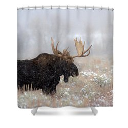 Shower Curtain featuring the photograph Foggy Moose Silhouette by Adam Jewell