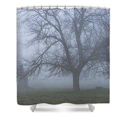 Foggy Morning Shower Curtain by Randy Bayne