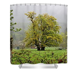 Foggy Morning Shower Curtain by Tanya Searcy