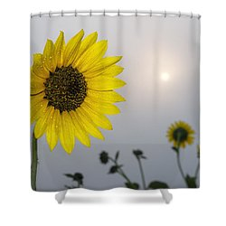 Foggy Sunflowers Shower Curtain by Rob Graham