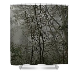 Foggy Woods Photo  Shower Curtain