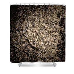Foliage Shower Curtain by Wim Lanclus