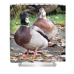 Quack..quack, Follow Me And I Follow You Later. Shower Curtain
