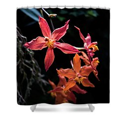Follow The Leader Shower Curtain by David Sutton