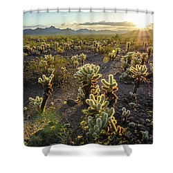 Sea Of Cholla Shower Curtain