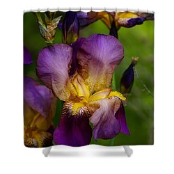 For The Love Of Iris Shower Curtain