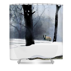 Foraging Grizzly Shower Curtain