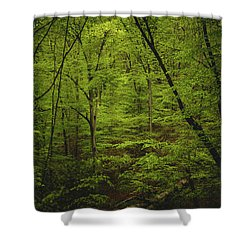 Shower Curtain featuring the photograph Forest Beckons by Shane Holsclaw