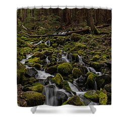 Forest Cathederal Shower Curtain by Mike Reid
