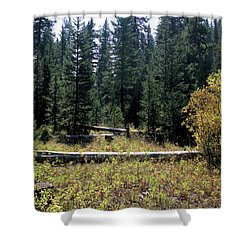 Forest Clearing Shower Curtain
