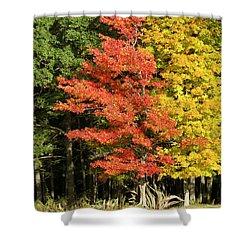 Forest Door Shower Curtain