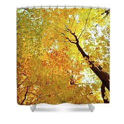 Forest Fall Yellow  Shower Curtain by Lyle Crump