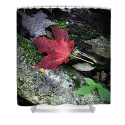 Forest Floor In Autumn Shower Curtain