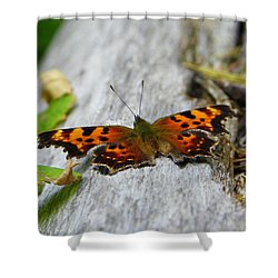 Forest Fritillary Shower Curtain