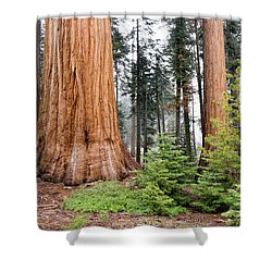 Shower Curtain featuring the photograph Forest Growth by Peggy Hughes