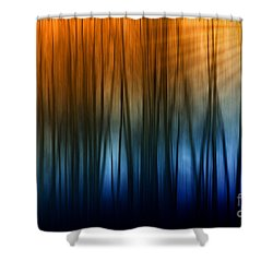 Shower Curtain featuring the photograph Forest Light by Clare VanderVeen