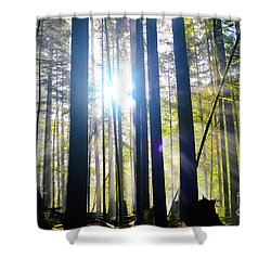 Forest Light Rays Shower Curtain