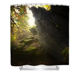 Forest Light Trail Shower Curtain