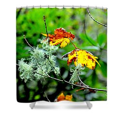 Forest Little Wonders Shower Curtain by Tanya Searcy