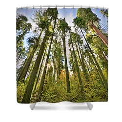 Forest Of Light Shower Curtain