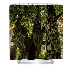 Shower Curtain featuring the photograph Forest Of Tokyo by Tatsuya Atarashi