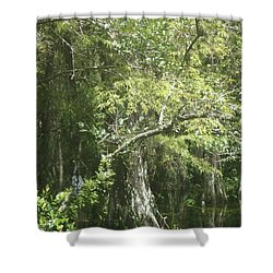 Forest On A Swamp Shower Curtain