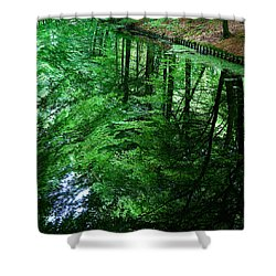 Forest Reflection Shower Curtain by Dave Bowman