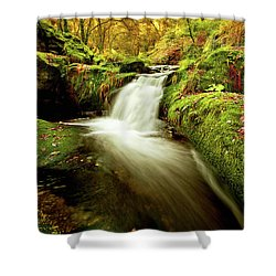 Forest Stream Shower Curtain by Jorge Maia
