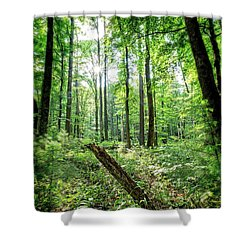 Shower Curtain featuring the photograph Forest Sun by Alan Raasch
