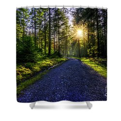 Shower Curtain featuring the photograph Forest Sunlight by Ian Mitchell
