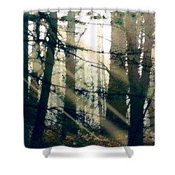 Forest Sunrise Shower Curtain by Paul Sachtleben