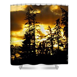 Shower Curtain featuring the photograph Forest Sunset  by Nick Gustafson
