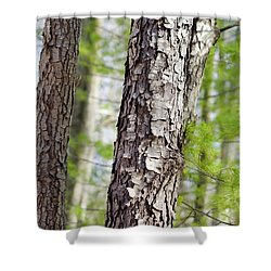 Shower Curtain featuring the photograph Forest Trees by Christina Rollo