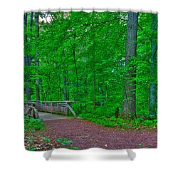 Forest Walk Shower Curtain by Kevin Hill