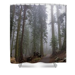 Shower Curtain featuring the photograph Forest Walking Path by Peggy Hughes
