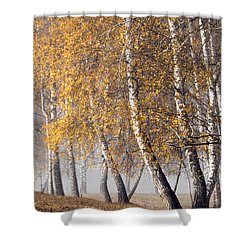 Forest With Birches In The Autumn Shower Curtain