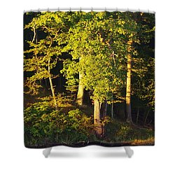 Forests Edge Shower Curtain