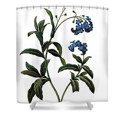 Forget-me-not Shower Curtain by Granger
